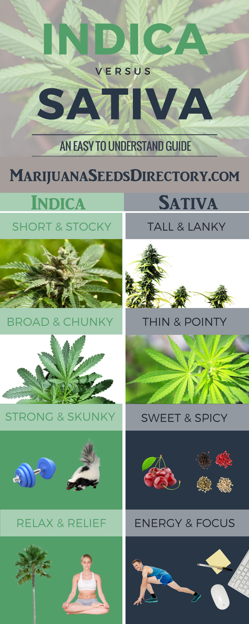 Differences Between Indica and Sativa Infographic